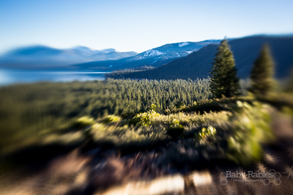 Tahoe with Lensbaby Spark | BabyRabies.com