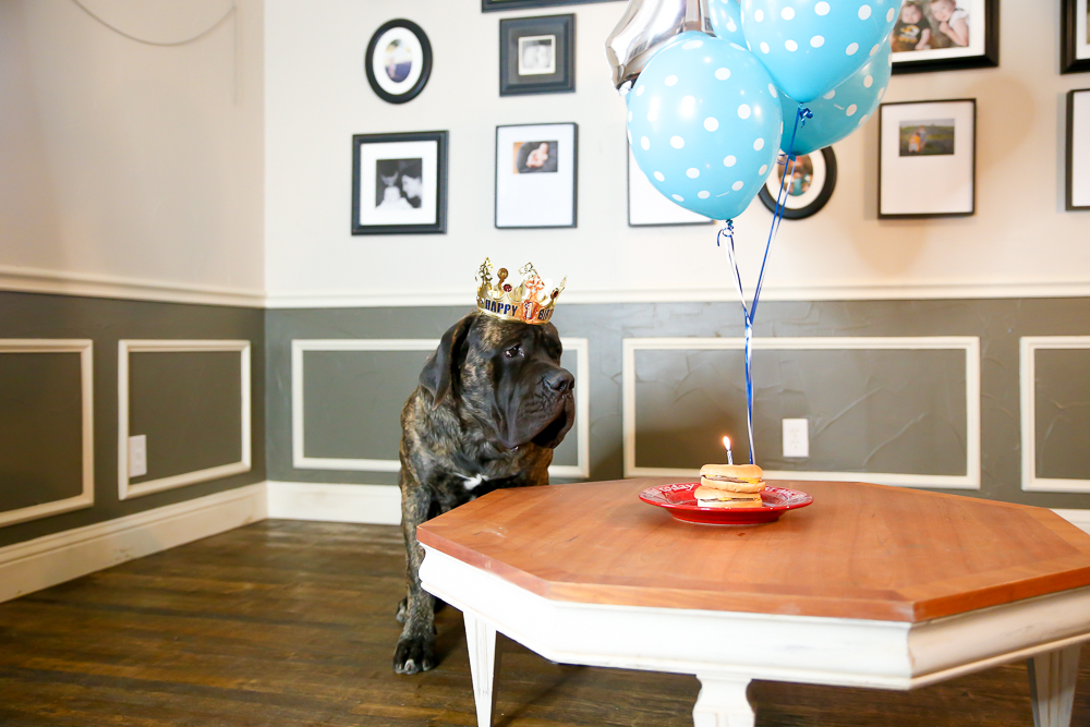 What The World Needs Now Is A Dog Birthday Party