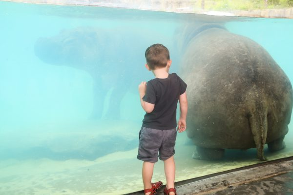 Tips For Squeezing In A Late Summer Trip To The Zoo