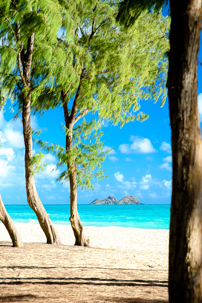 I Brought You All Souvenirs From Hawaii- Free Photo Downloads | BabyRabies.com