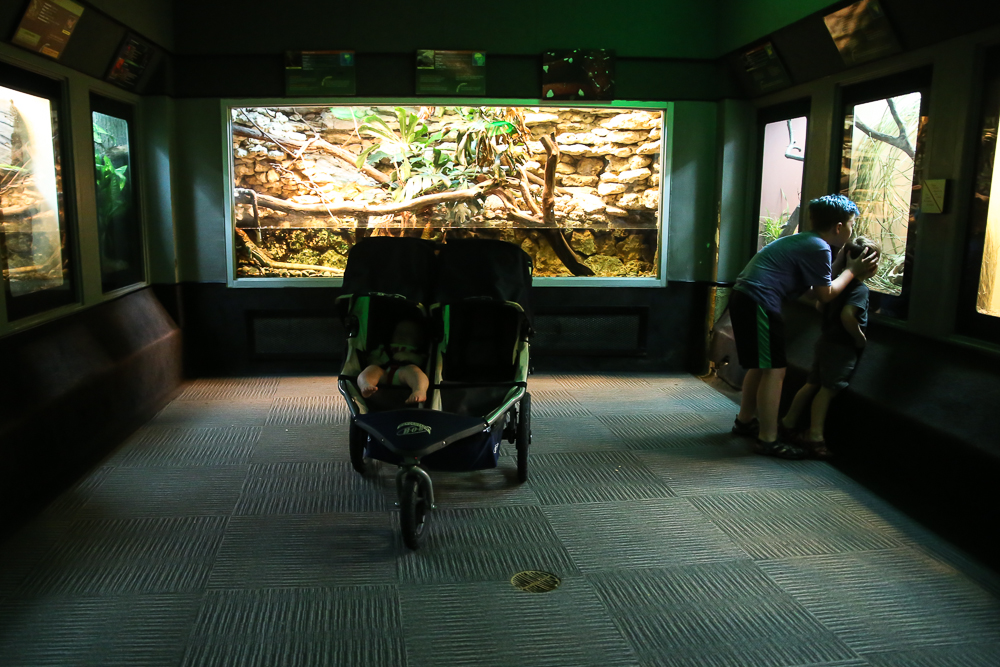 Tips For Squeezing In A Late Summer Trip To The Zoo & How To Get Free Kids Admission For A Limited Time | BabyRabies.com